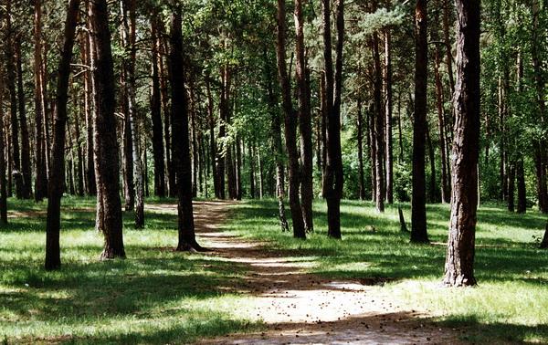 http://www.photoukraine.com/i/articles/rastitelnost/002.jpg