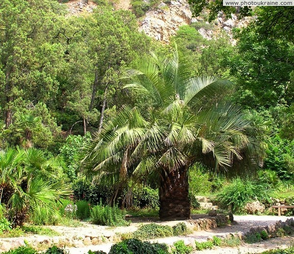 Nikitsky Botanical Garden Autonomous Republic of Crimea Ukraine photos