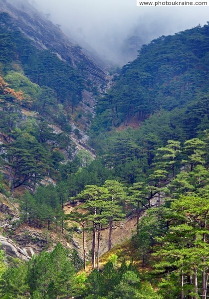 Yalta Reserve. Mountain forests Autonomous Republic of Crimea Ukraine photos