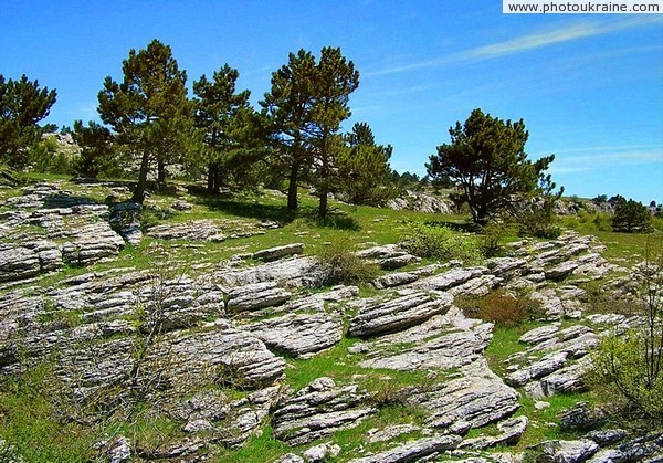 Yalta Reserve. Slopes Ay-Petri yayla Autonomous Republic of Crimea Ukraine photos