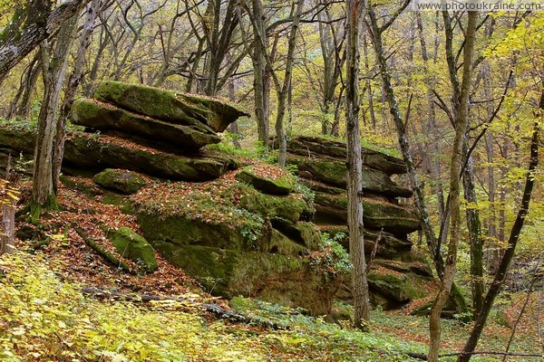 Busha. Rock Sheep in Gaydamak Yar Vinnytsia Region Ukraine photos