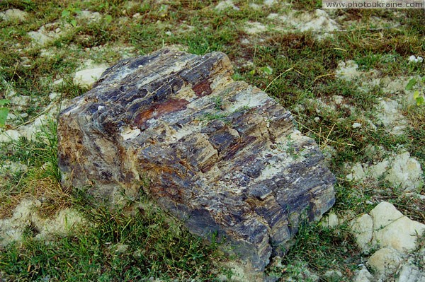 Oleksievo-Druzhkivka. Fragment of fossilized tree trunk Donetsk Region Ukraine photos