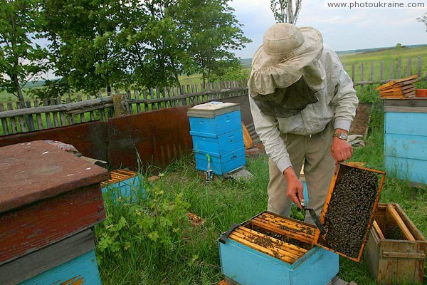 Kamiani Mohyly Reserve. On reserve apiary Donetsk Region Ukraine photos