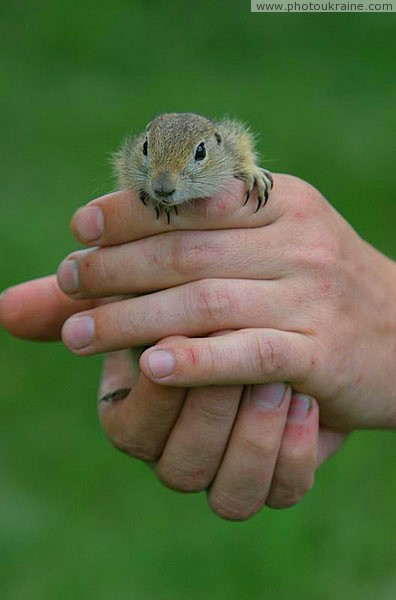 Kamiani Mohyly Reserve. Rodent and human Donetsk Region Ukraine photos