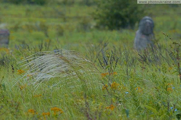 Kamiani Mohyly Reserve. Lone feather Donetsk Region Ukraine photos
