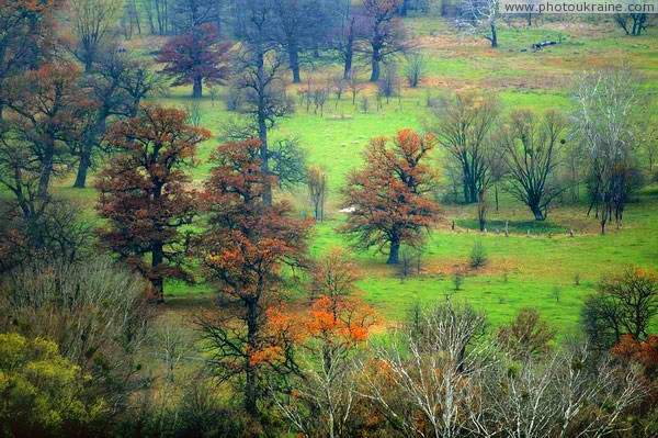 Park Sviati Gory. Old trees on terrace of river Donetsk Region Ukraine photos