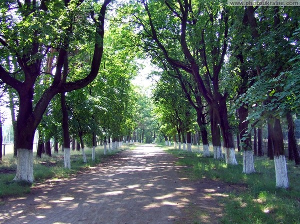Ushomyr. Main alley of park Zhytomyr Region Ukraine photos
