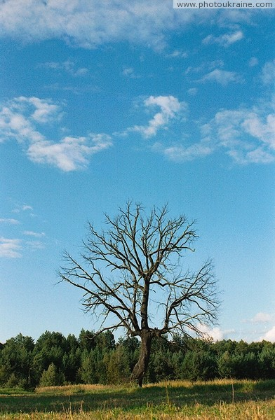 Silhouette of dead tree Zhytomyr Region Ukraine photos