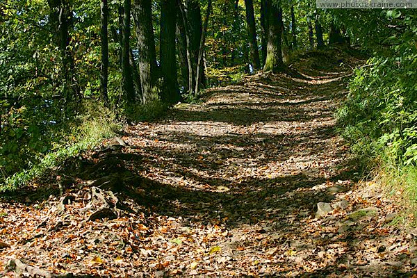 Hust. Forest road to ruins of castle Hust Zakarpattia Region Ukraine photos