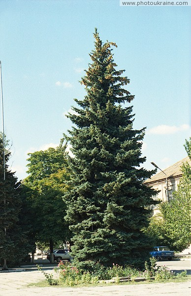 Prymorsk. High-fir in central square Zaporizhzhia Region Ukraine photos