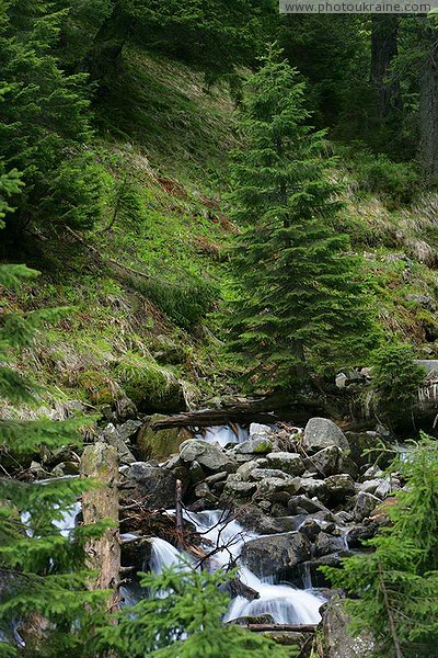 Carpathian NNP. Pointed stream stream Ivano-Frankivsk Region Ukraine photos