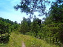 Park Sviati Gory. Young fir park, Donetsk Region, National Natural Parks