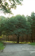 Park Sviati Gory. In upland terrace park, Donetsk Region, National Natural Parks