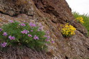 Starolaspa. Flowers and stones, Donetsk Region, Geological sightseeing