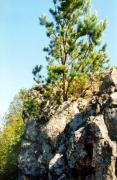Vysokyi Kamin. Pine in pegmatite rock, Zhytomyr Region, Geological sightseeing