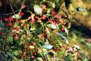 Vysokyi Kamin. Berries have high stone cliffs, Zhytomyr Region, Geological sightseeing
