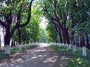 Ushomyr. Main alley of park, Zhytomyr Region, Country Estates