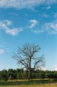 Silhouette of dead tree, Zhytomyr Region, Roads