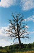 Chilling death of tree, Zhytomyr Region, Roads