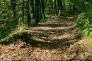 Hust. Forest road to ruins of castle Hust, Zakarpattia Region, Cities