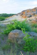 Terpinnia. Vegetation inhibits sand from erosion, Zaporizhzhia Region, Geological sightseeing