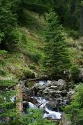 Carpathian NNP. Pointed stream stream, Ivano-Frankivsk Region, National Natural Parks