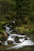 Carpathian NNP. Empty mountain stream, Ivano-Frankivsk Region, National Natural Parks